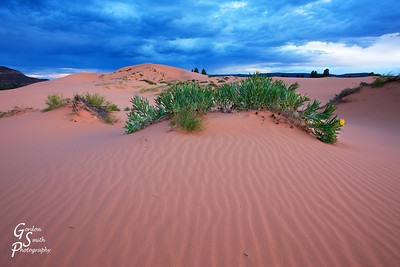 Storm over Sand Coral Pink Sand Dunes