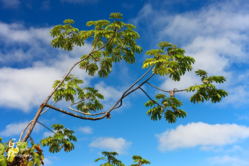 single tree branch against cloudy blue skies