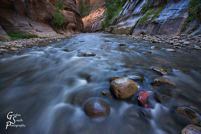 Standing Still  This rock keeping its' head above the water captured my attention as I waded up the Zion Narrows.