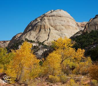 Yellow Trees, White Dome