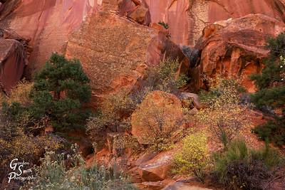 Desert Garden Closeup