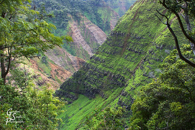 Kauai interior canyons glow with green lushness.  This is Po'omau canyon in Koke'e State Park.